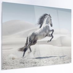 "DesignArt 'Galloping White Horse' Photographic Print on Metal Size: 30"" H x 48"" W x 1"" D"