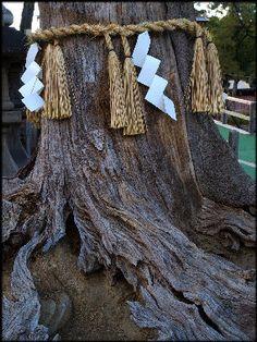 20090819-Ray Kinnane shinto roped_tree.jpg 285×380 pixels