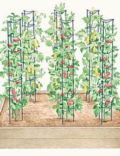 """Tomato Ladders hold a huge harvest — over 100 pounds. I have a small garden in my front yard. With ladders I can get more plants in a small space. They keep my garden tidy."""""""