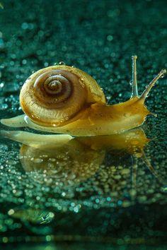 atraversso:  Snail by Cesar Castillo