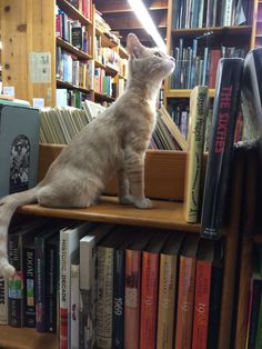 Book guardian.