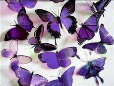 Purple Butterflies Wallpaper 17473487 Fanpop