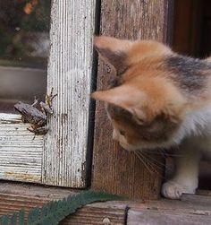 Curiosity! So cool! :)