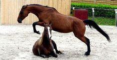 Horse jumping horse !