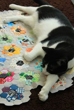 I could make a blanket specifically for my cat, but then he'd rather lay on anything but...