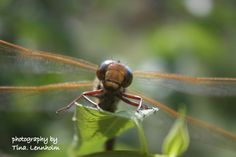 A Dragonfly landed and stay for awhile :)