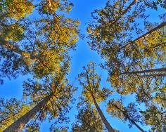 Surrounded by Trees Photo Print by BuffaloGoods on Etsy