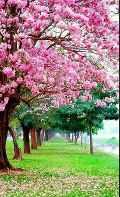 My yard will be all flowering trees Beautiful Nature Wallpaper, Beautiful Landscapes, Beautiful Gardens, Beautiful Flowers, Beautiful Places, Scenery Wallpaper, Landscape Wallpaper, Natur Wallpaper, Landscape Photography