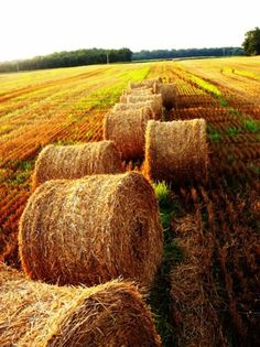 love fields of freshly rolled bails of hay