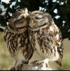 "THIS IS CUTE! One owl was sitting on a limb and the other turned his head all the way around. The owl asked ""what's wrong?"" the other owl said. ""owl be looking out for you owlways"" Beautiful Owl, Animals Beautiful, Beautiful Images, Romantic Animals, Majestic Animals, Simply Beautiful, Baby Animals, Cute Animals, Baby Owls"