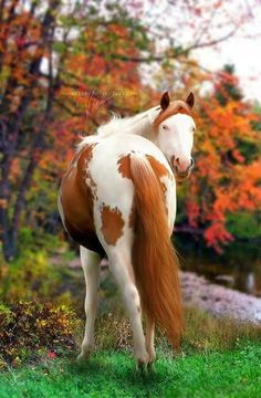 Pretty painted horse