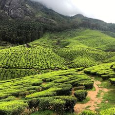 Munnar - Western Ghats, South India by Alan_magor | Rolling Hills | Asia | Greenery | Mountains