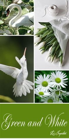 Lu's Inspiration ღ green and white