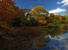 Picturesque New England fall foliage photography captured in the Boston Arnold Arboretum in Jamaica Plain, Massachusetts. The nature photograph taken during New England autumn foliage peak colors in October. Good light and happy photo making!  My best,  Juergen Prints: www.RothGalleries.com Licensing: www.ExploringTheLight.com @NatureFineArt https://www.facebook.com/naturefineart