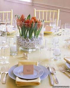 """Blooming bulbs arranged in a large hurricane, anchored by pebbles, lovely inexpensive arrangement adds visual interest. See the """"Bulb Centerpiece"""" in our Elegant and Inexpensive Wedding Flower Ideas gallery, Martha Stewart weddings."""