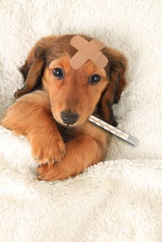 Everything Pet Parents Need To Know About The Dog Flu Outbreak | Dr. Ernie Ward