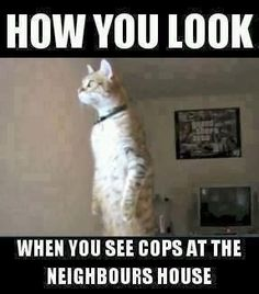 Check out this funny meme!  Click on the picture to see hundreds more!