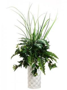 Grass and Fern Silk Plant and Greenery GRWP7484