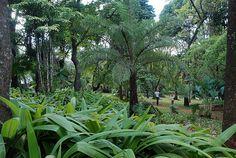 O parque mais popular da capital mineira - BH