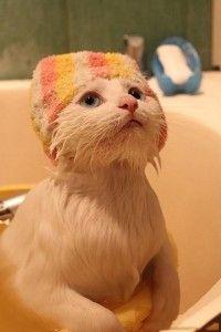 como bañar un gato2