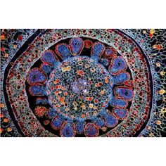 Cross section of a flower ovary. Beach Mat, Outdoor Blanket, Tapestry, Rugs, Flowers, Beautiful, Home Decor, Hanging Tapestry, Farmhouse Rugs