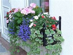 Window box idea - Lawn and Garden Today Window Box Plants, Window Box Flowers, Window Planters, Window Ledge, Window Boxes, Flower Boxes, Hanging Planters, Hanging Baskets, Container Flowers