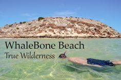 Whalebone Beach, The most beautiful beach ever? - Journey of a Nomadic Family Beach Cove, Shell Beach, Visit Australia, Western Australia, Loggerhead Turtle, Reef Shark, Crystal Clear Water, Snorkelling, Most Beautiful Beaches