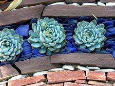 Blue Echeveria embedded in blue glass chips: