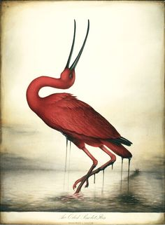 """""""Oiled Scarlet Ibis"""" by Lindsey Carr (@lindseycarr.co.uk)"""