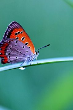 Never seen a butterfly with these colors in real life~