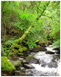 Ireland, Kerry, Killarney National Park, Torc Waterfall (by theheartoftheeye)