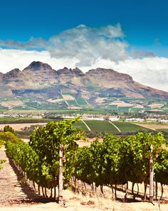 The wine region of Stellenbosch, near Cape Town, South Africa. BelAfrique your personal travel planner - www.BelAfrique.com