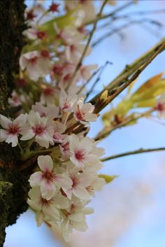 #blossom #flowers #beautiful #spring