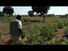 See how laptops are saving an essential crop in #Africa