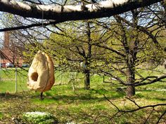 Bridhouse: A bird house made entirely out of bread. Designed by Jeremiah Tesolin