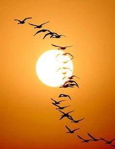 Migrant birds fly over the Poyang Lake in east China's Jiangxi province Photograph: Fu Jianbin/Corbis
