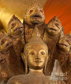 Buddhist Statues C - photograph by Jo Ann Tomaselli.  #joanntomaselli #fineartphotography #buddha