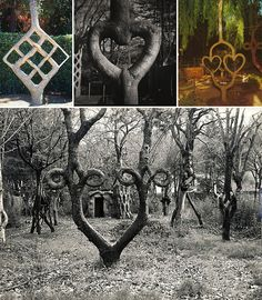 Axel Erlandson and the art he created with live trees.