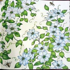 "Colouring book ""The garden of earthly delights""  #컬러링북#색칠공부#꽃#꽃스타그램 #취미스타그램#색연필#리라색연필 #coloringbook#colouringbook#beautifulcoloring#livrocoloriramo#colouredpencils #thegardenofearthlydelights"