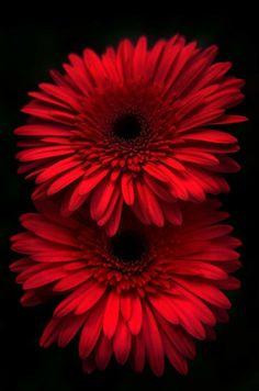 Purple Flowers Wallpaper, Flower Phone Wallpaper, Beautiful Flowers Wallpapers, Frühling Wallpaper, Wallpaper Iphone Cute, Cellphone Wallpaper, Flowers Nature, Exotic Flowers, Pretty Flowers