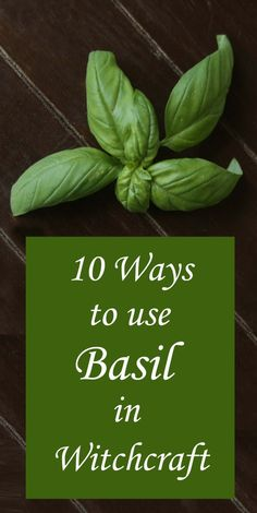 10 Ways to Use Basil in Witchcraft, Spells and Magick
