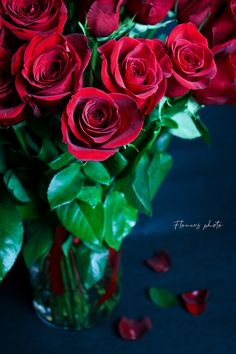 Elegantné – Flowers Photo Rose, Flowers, Plants, Pink, Roses, Florals, Plant, Flower, Bloemen