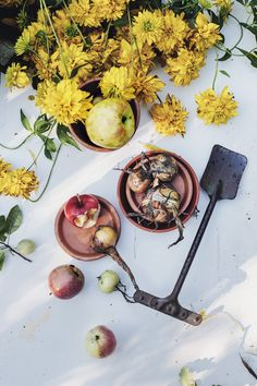 Takes from the garden diary: August.