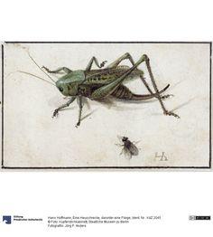 Hans Hoffmann | Eine Heuschrecke, darunter eine Fliege, 1580
