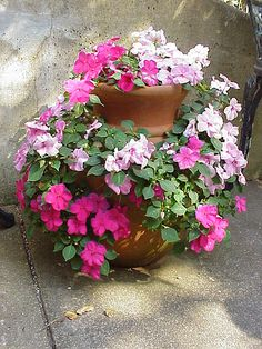 Strawberry Pot Impatiens by Enchanted Rose Studio, via Flickr