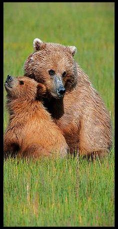 Mother Bear and Cub  photo via: 500px.com