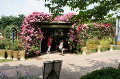 서울대공원 (Seoul Grand Park) , 과천시, 경기도