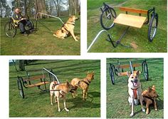 Travel By Dog: Carting & Scootering Are Hot!