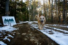 Free range cattle dog. Sunday run at The Woods at Long Pond