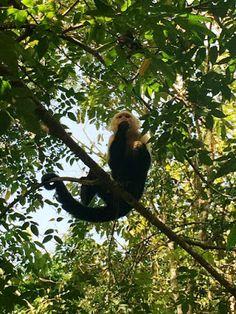 Paraíso Carlisa · Costa Rica: wildlifeandvolunteers